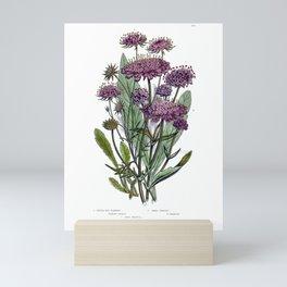 Victorian Botanical Illustration Mini Art Print