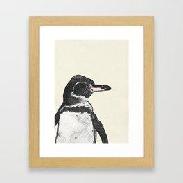 Galapagos Pengin Framed Art Print