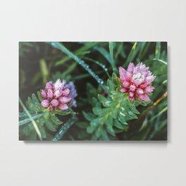 Dos Floras Metal Print