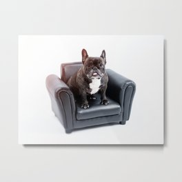 French bulldog portrait Metal Print