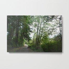 Tree Enclosed Path Metal Print