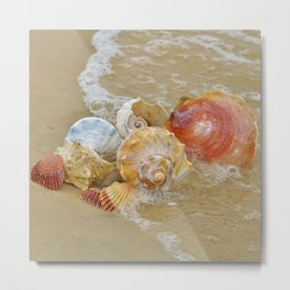 Sea Shells by the Seashore Metal Print