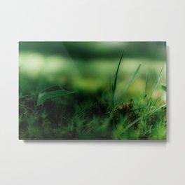 Macro Haircap Moss Metal Print