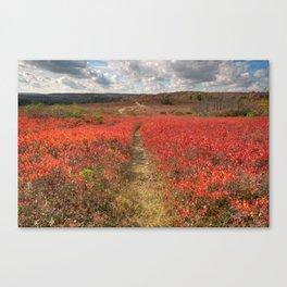 Autumn Huckleberry Trail Canvas Print