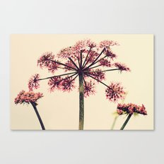 Cow Parsley Canvas Print