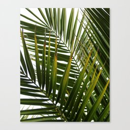 Tropical Decor 2 Canvas Print