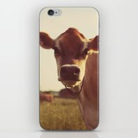 cow iPhone & iPod Skins featuring cow by Beverly LeFevre