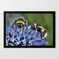 bees Canvas Prints featuring Bees by Doug McRae