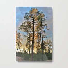 Pines All A Glow Metal Print