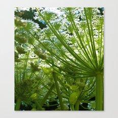 HOGWEED Canvas Print