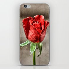 Red Rose Red iPhone & iPod Skin