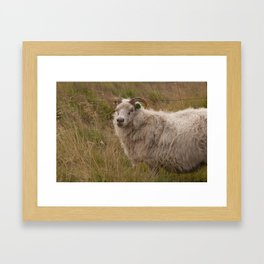 Country Cotton Ball Framed Art Print