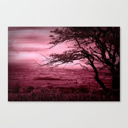 Rosy Evening Canvas Print