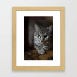 phil cat Framed Art Print