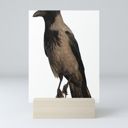 Hooded Crow Isolated Mini Art Print