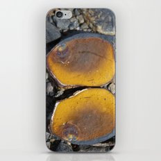 Matched iPhone & iPod Skin