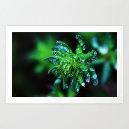 Dew Drop Succulent Art Print