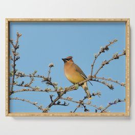 Cedar Waxwing Faces Sunset Serving Tray