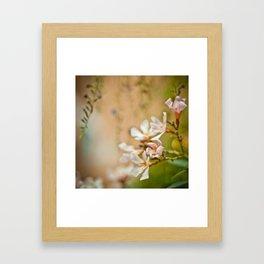 Flowers2 Framed Art Print