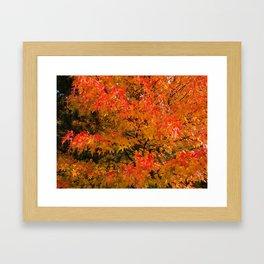 Maple Flames Framed Art Print