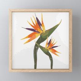 Paradise Flower Framed Mini Art Print