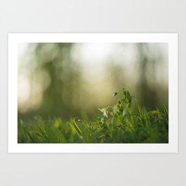 Alone in the grass Art Print