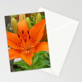 Summer Lily I Stationery Cards