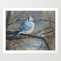Winter Bluejay Art Print