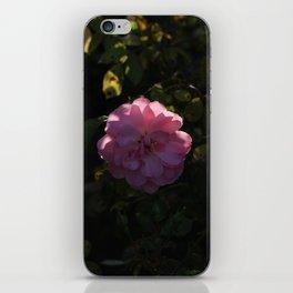 Pink Champagne iPhone Skin