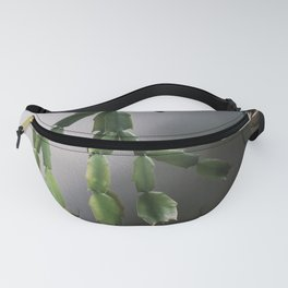 Zimmerpflanze Fanny Pack