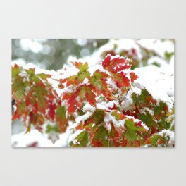 Holiday colors in a clash of seasons Canvas Print