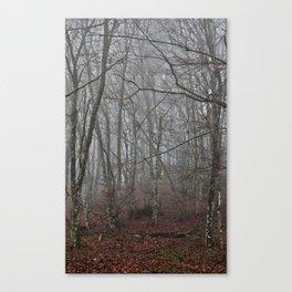 Dark forest. Canvas Print