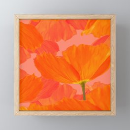 Beautiful Poppies Coral Color Background #decor #society6 #buyart Framed Mini Art Print