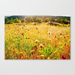 (Texas) Field of Dreams Canvas Print