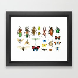 The Usual Suspects - insects on white Framed Art Print