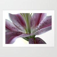 macro pink flower  Art Print