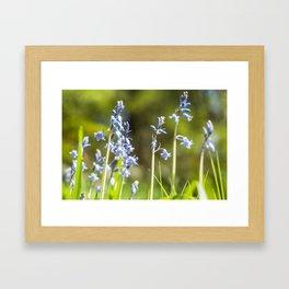 Spring Bells Framed Art Print