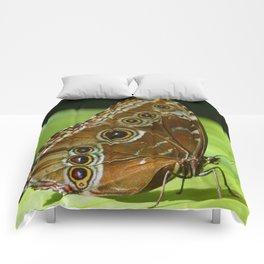 Beautiful Butterfly Wings of Meadow Brown Comforters