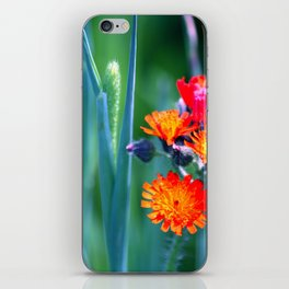 Fire Colors in the Greenery iPhone Skin