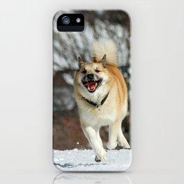 Icelandic Sheepdog 016 iPhone Case