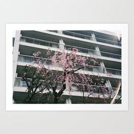 Cherry Blossom Balcony Art Print