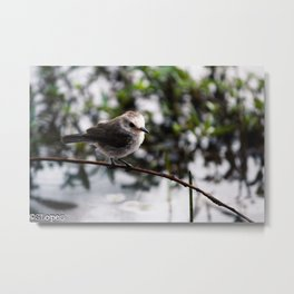 Birds from Pantanal  Chimbum Metal Print