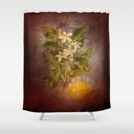 Vintage Fruit Shower Curtain