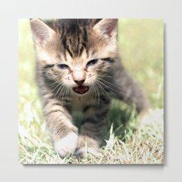 Katze, Cat Metal Print