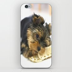 Puppy And the First Chewing Bone  iPhone & iPod Skin