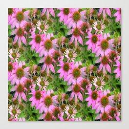 Echanicea Flowering.... Canvas Print