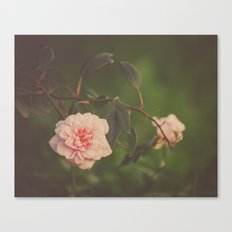 Silent Rose Canvas Print