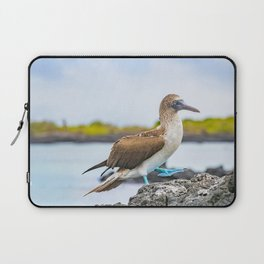Blue-footed booby Galapagos bird Laptop Sleeve