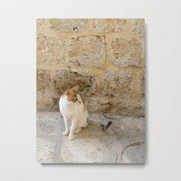 Summertime Cat  Metal Print