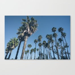 Another Perfect Day Canvas Print